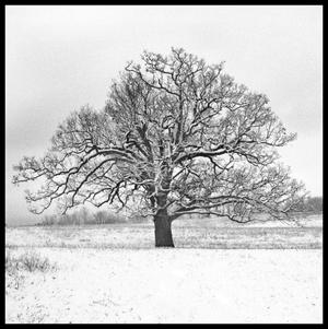 treebw2.jpg